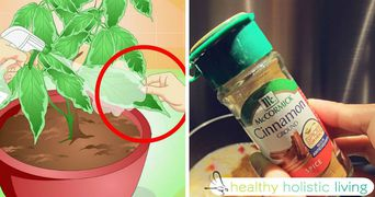 A adaugat o lingura de scortisoara pe plantele din casa. Uite ce lucru uimitor s-a intamplat!