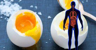 Ce se intampla in corpul tau atunci cand mananci 3 oua pe zi