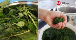 Invata sa prepari sirop de urzica! Face minuni pentru organism!