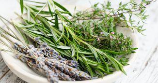 Remedii naturiste pentru zodia ta - Ce plante si ierburi te vindeca in functie de data nasterii
