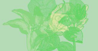 Ce floare vezi pentru prima oara in imagine? Afla ce spune asta despre tine