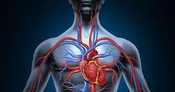 Ai probleme cu circulatia? Elixiru asta iti intareste vasele de sange