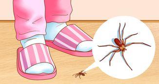 Metoda incredibila care elimina paianjenii din casa