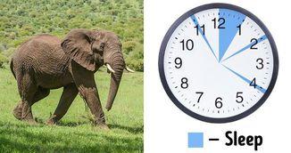 Programul de somn care iti permite sa dormi 2,5 ore pe noapte fara sa fii obosita!
