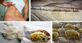 E posibil sa imparti patul cu peste 1,5 milioane de acarieni in fiecare noapte! Scapa de ei prin aceasta metoda simpla