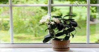Plante pe care trebuie sa le ai in dormitor! Te ajuta sa dormi mai bine