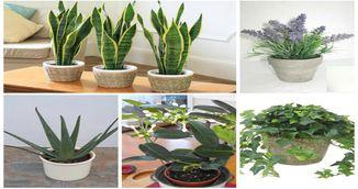 Vrei sa dormi mai bine? Trebuie sa ai aceste plante la tine in dormitor!