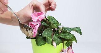 Ti s-au uscat plantele din casa? Uite cum le readuci la viata cu un truc simplu