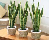 Trebuie sa ai plantele astea in dormitor! Te ajuta sa dormi mai bine si purifica aerul!
