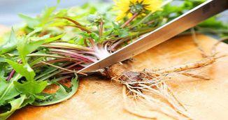 S-a descoperit planta care ucide celulele canceroase in 48 de ore!