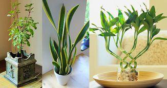 Acestea sunt plantele care atrag energia pozitiva in casa si la birou! Trebuie sa le ai!