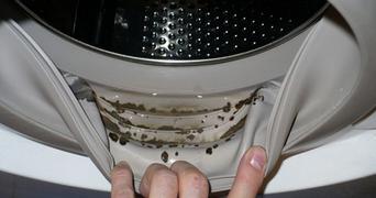 A amestecat doua ingrediente si a scapat pentru totdeauna de mucegaiul si mirosul neplacut din masina de spalat